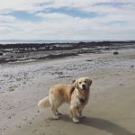 A dog blog: dog friendly East Neuk and St Andrews