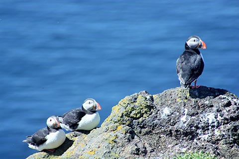 FASCINATING WILDLIFE – Take a boat trip to the Isle of May