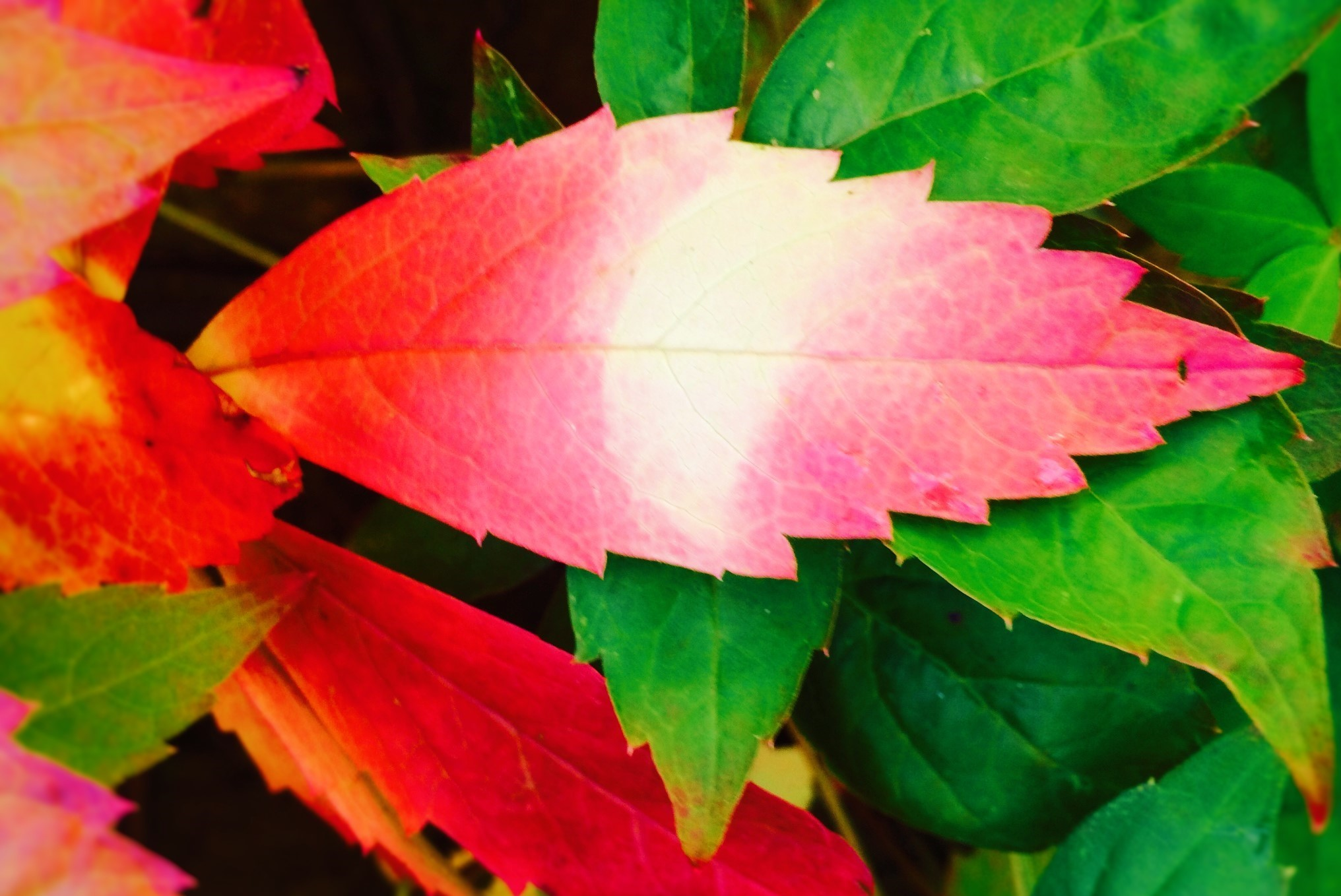 GARDEN - Colourful Autumn leaves