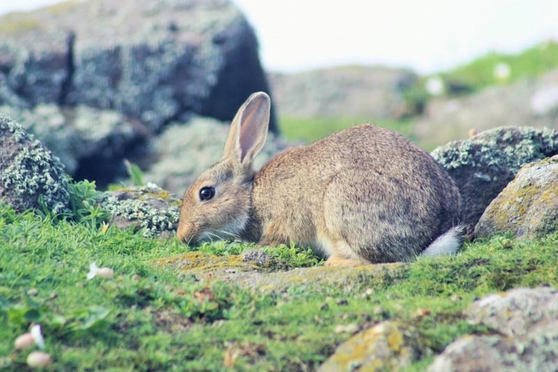 bunny may (2)