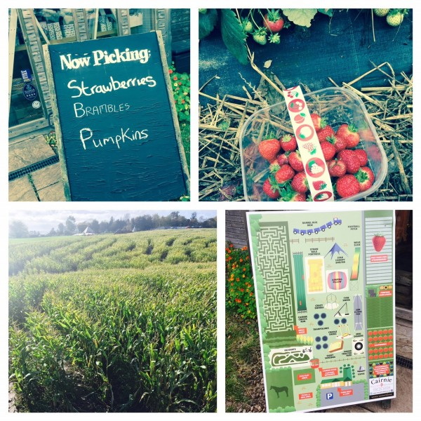 Fun on the farm - fruit picking, mega maze and kids play area, Cairnie Fruit Farm