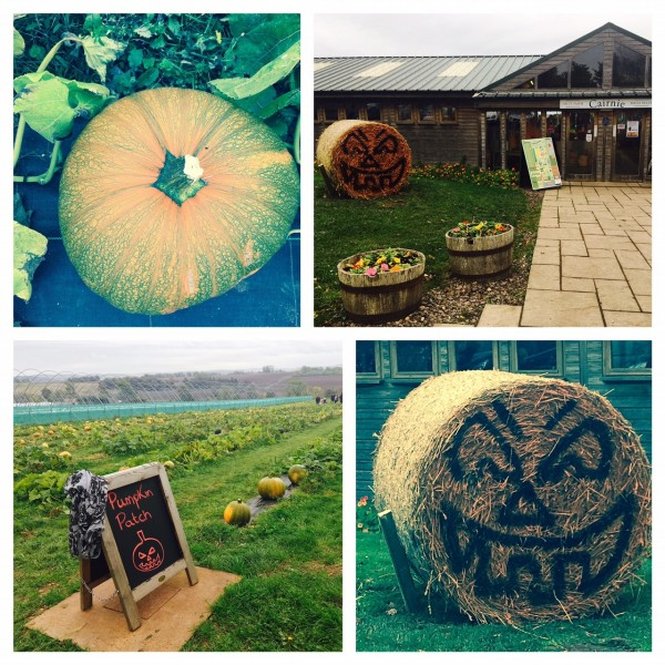 Pick your own pumpkins, Cairnie Fruit Farm